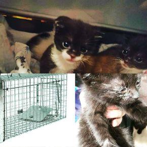 Avatar Fundacja Kocięta Koty z Interwencji